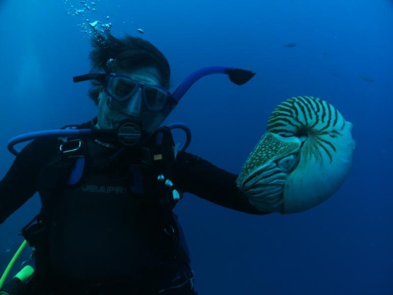 Nautilus Diving in Palau