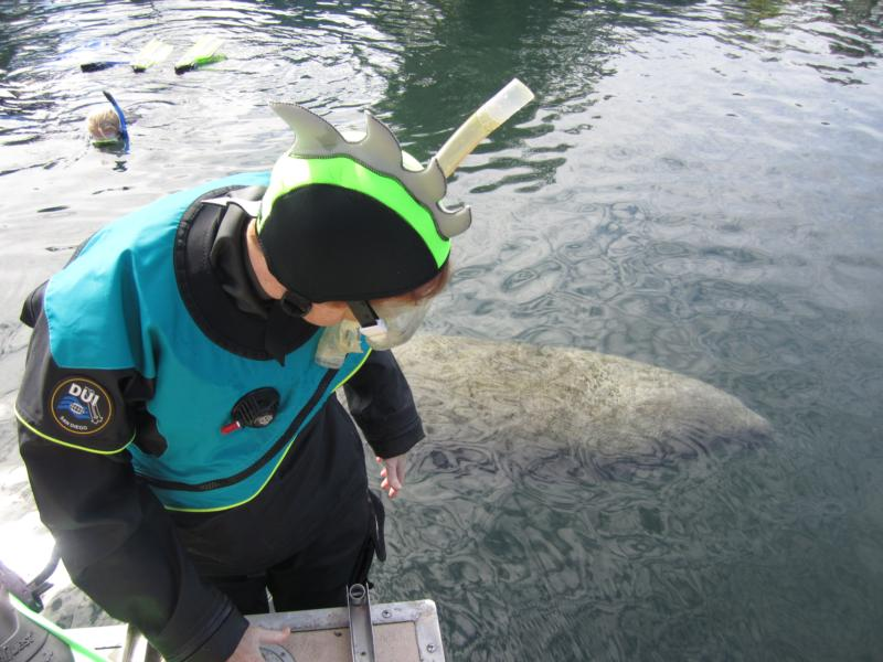 Crystal River Sea Monsters