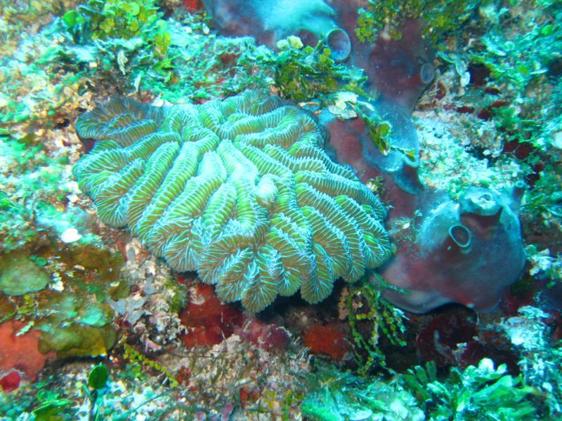 Yucab Reef, Cozumel