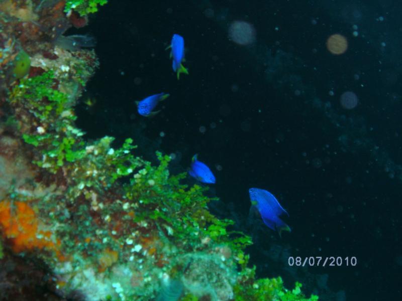 Tokai Maru night dive 2