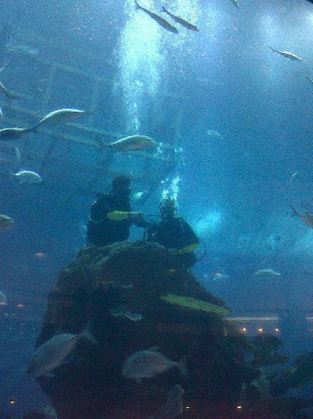 Dubai Aquarium 2
