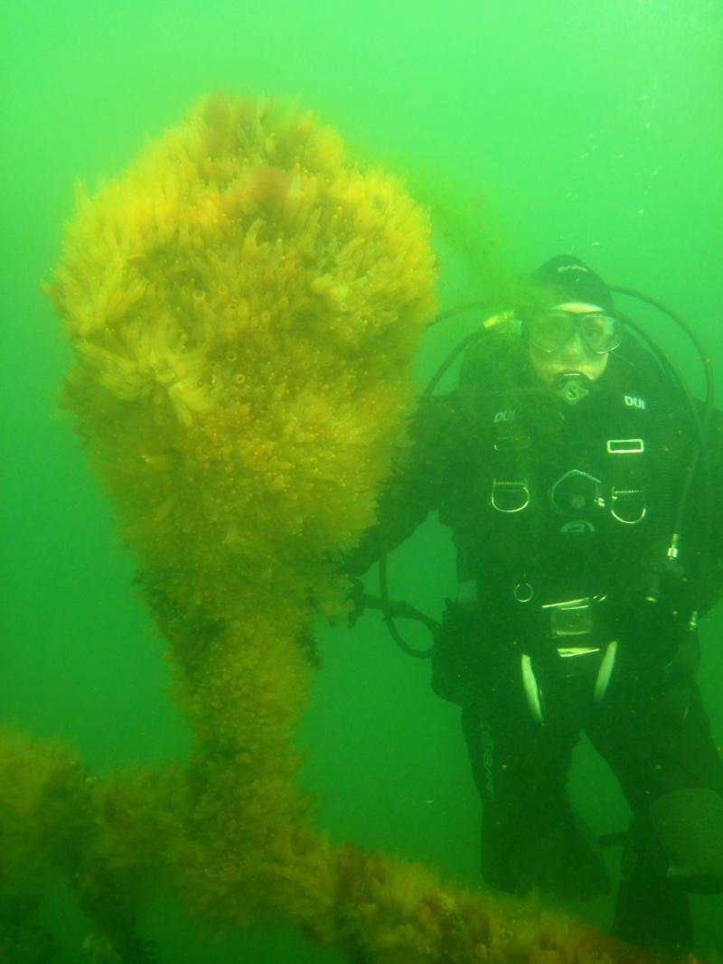Diving in PEI, Canada