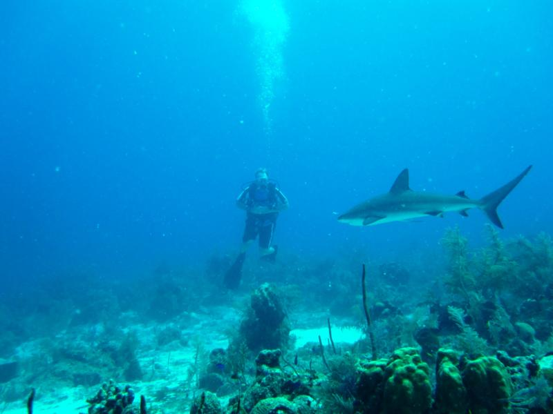 Wheres my dive buddy? NW Point- Grand Turk, TCI