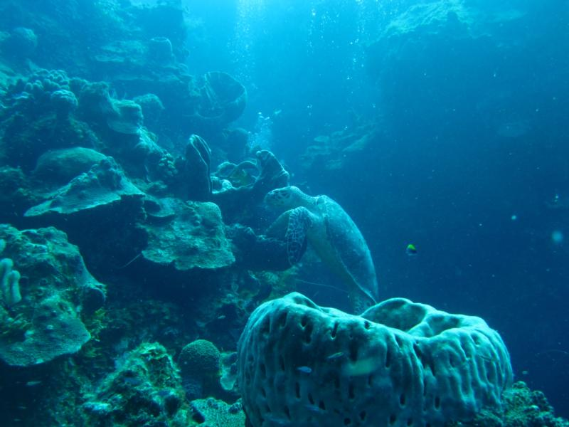 Wall dive Grand Turk, TCI