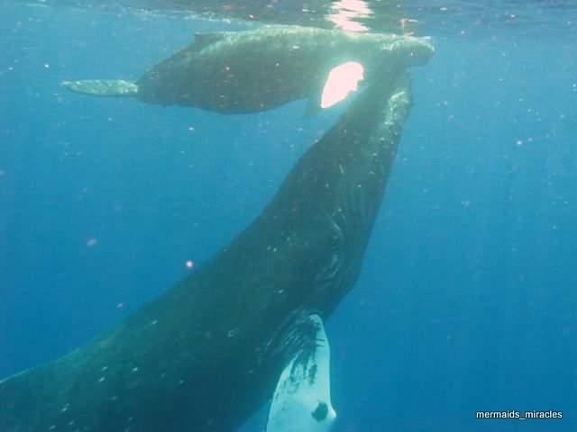 Mama & Baby Humpback whales