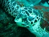 Turtle03