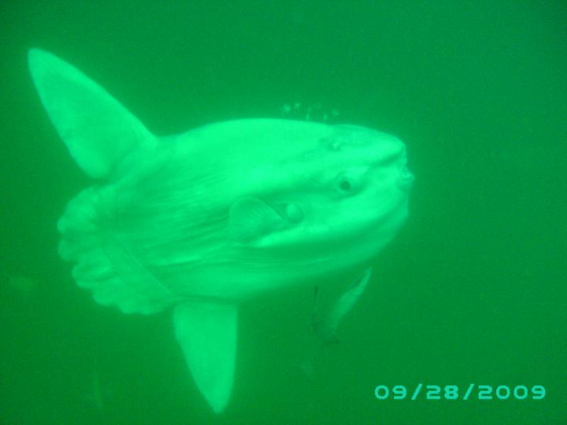 Atlantic Sun Fish, Morehead City, NC