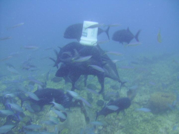 GabGab2 Guam- they feed 'em