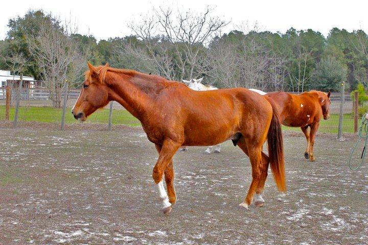 my horse, Captain