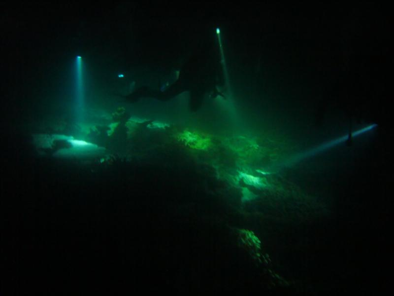 Night dive in Maldives... Looks like we've landed on the moon!