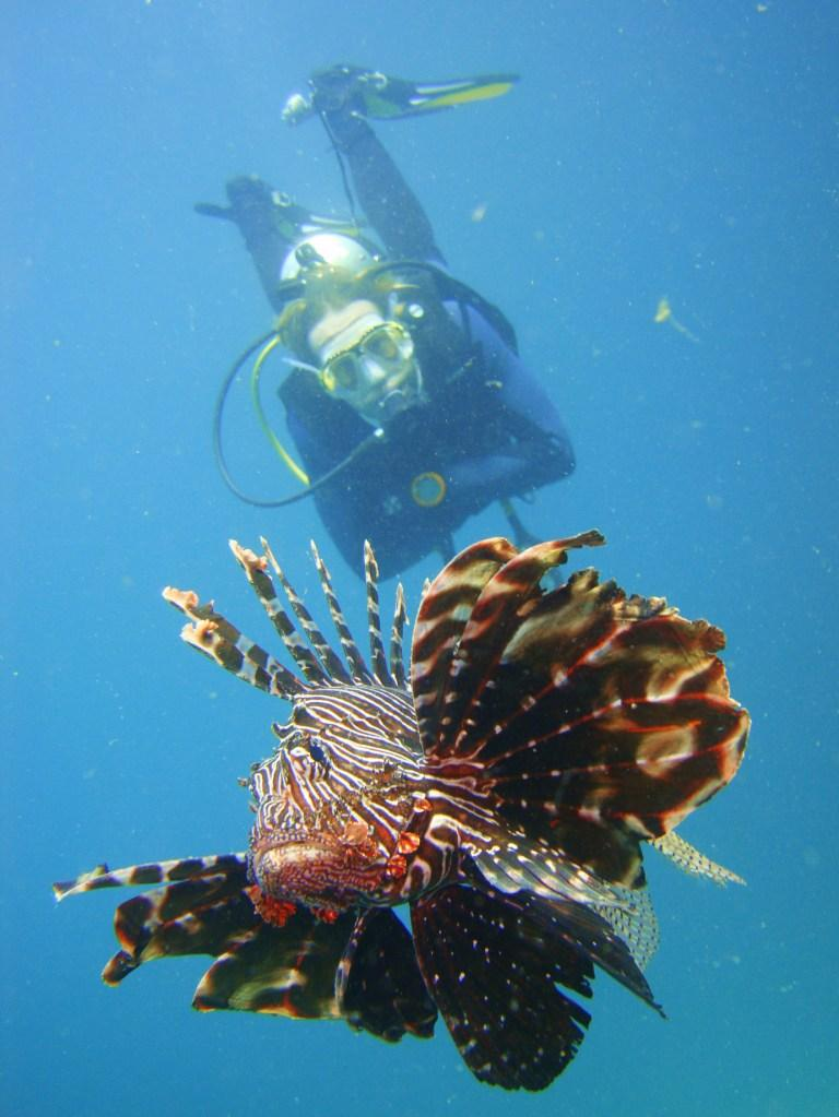 My Buddy & Friendly Lion Fish on a Safety Stop