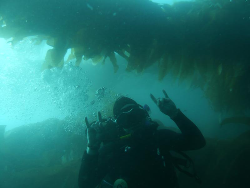 Kelp Forest Rocks!