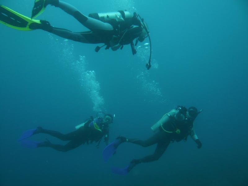 Dive Buddies!