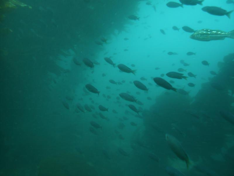 Kelp Column w/ Kelp Bass and Blacksmith