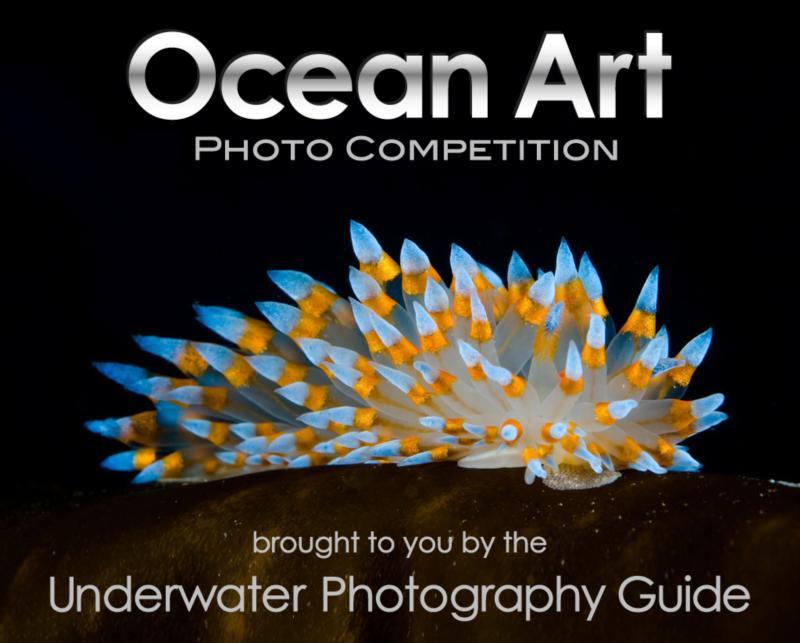 Ocean Art Photo Contest