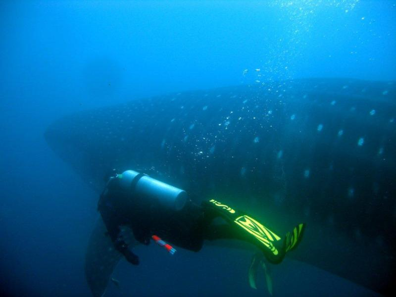 Galapagos, Whale shark and me.
