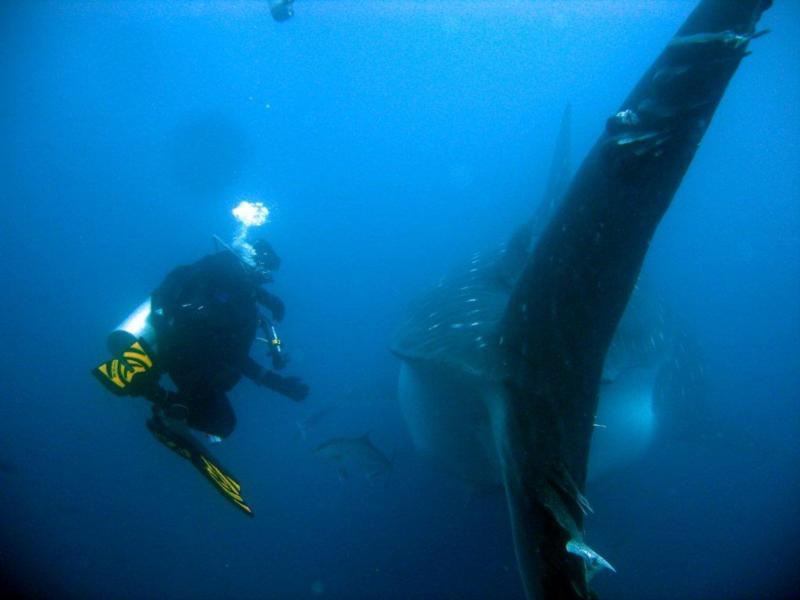Galapagos, whale shark tail, me.