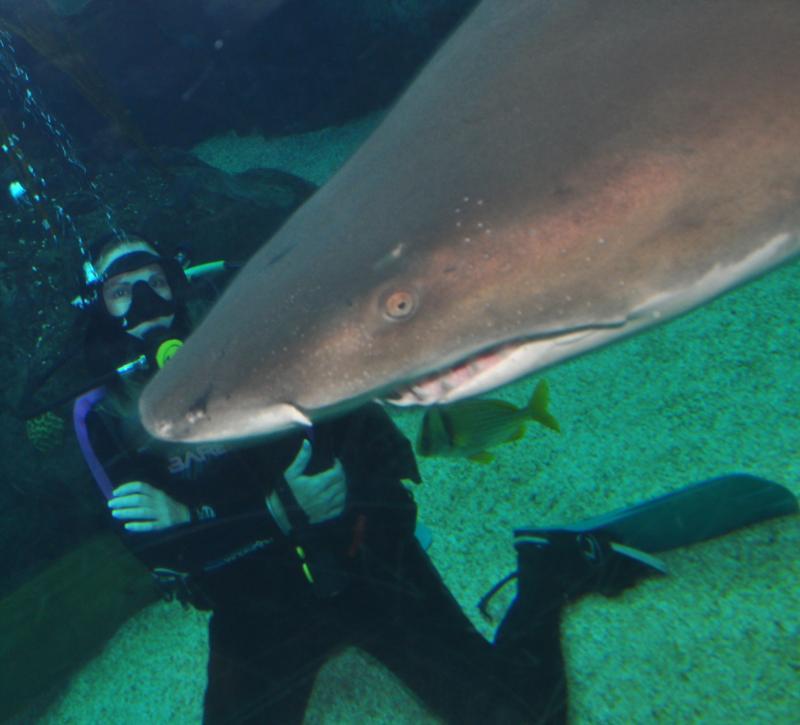 Dive with Sharks @ Florida Aquarium 7/17/11