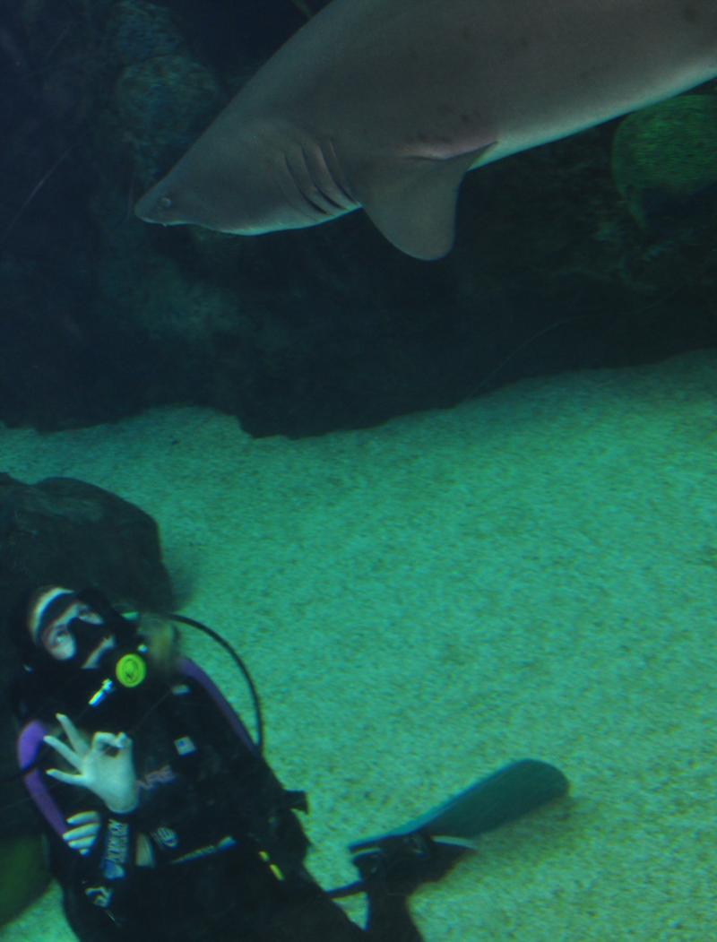 Shark Dive 7/17/11 Fl Aquarium in Tampa