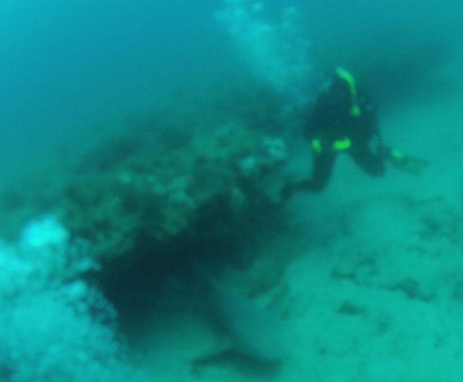 Drift Dive West Palm Apr 2012