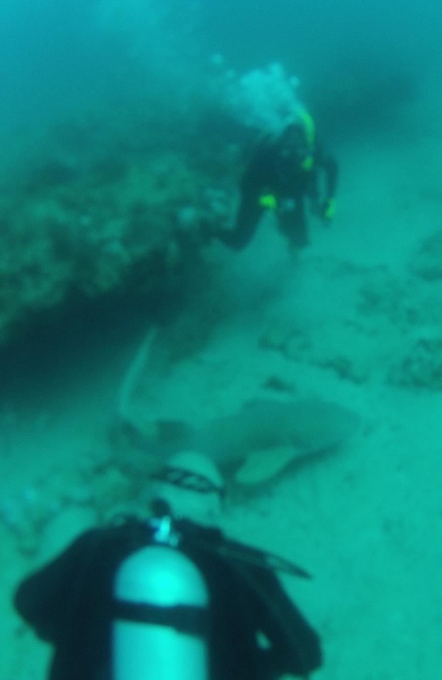 West Palm Dive Apr 2012