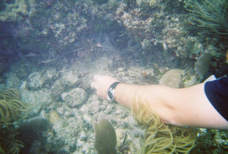 Trying to coax the lobster out for a better pic :) 7/2011 Sombero Reef Marathon, FL Keys