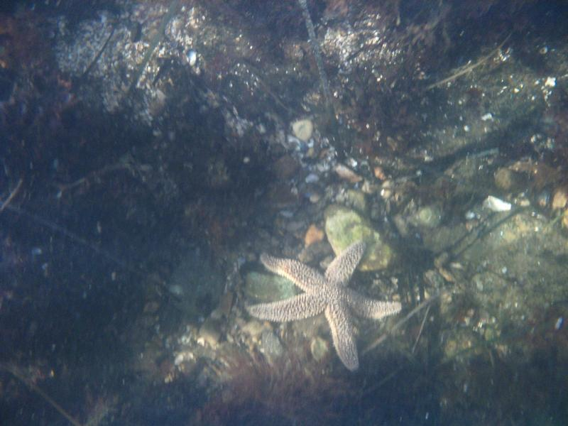 Big Starfish, Stonington, CT
