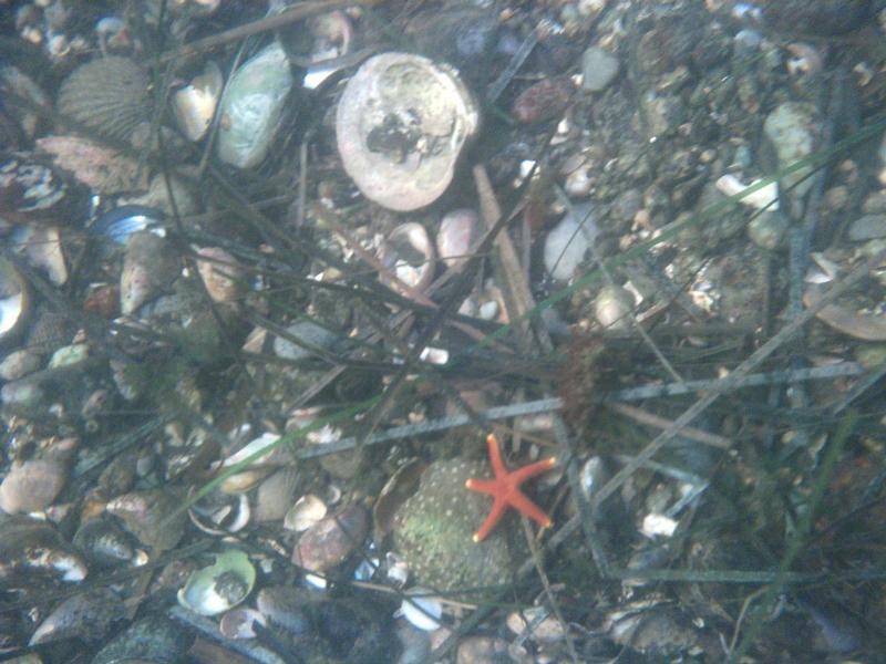 Tiny starfish - Stonington, CT