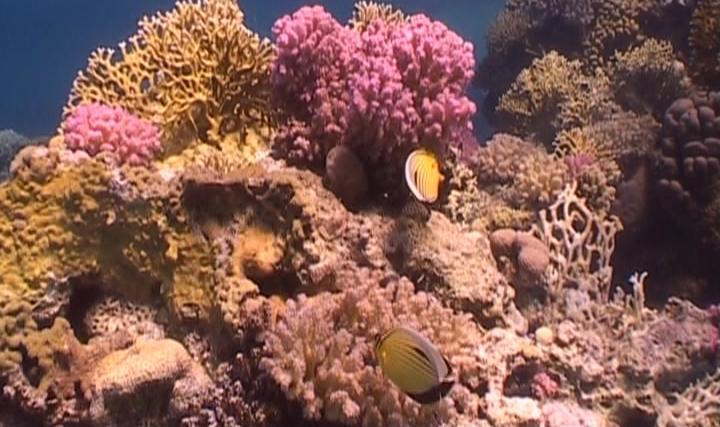 dream dive in the red sea
