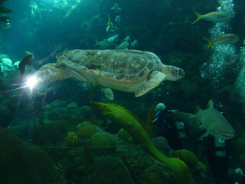 Aquarium dive in Tampa