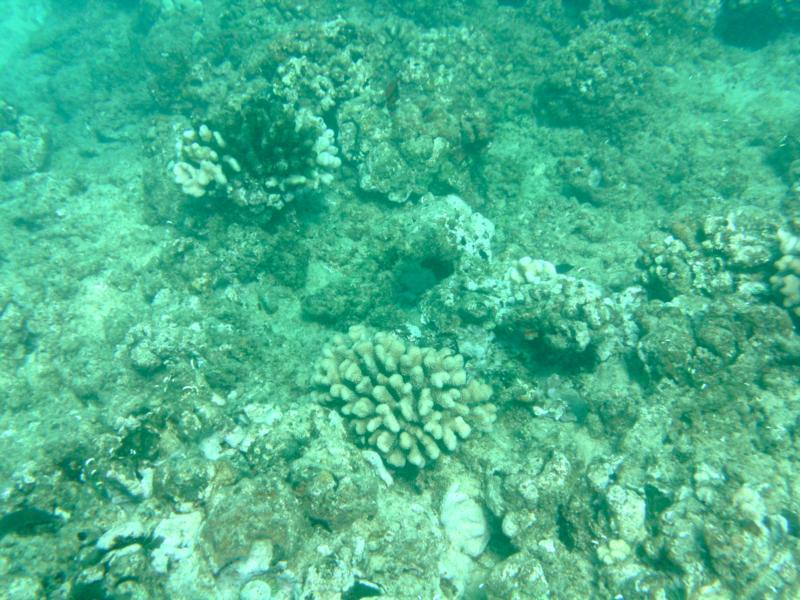 Taken on a dive at Electric Beach, Oahu, Hawaii
