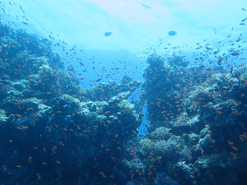 abu dabbab #6 - red sea 2011