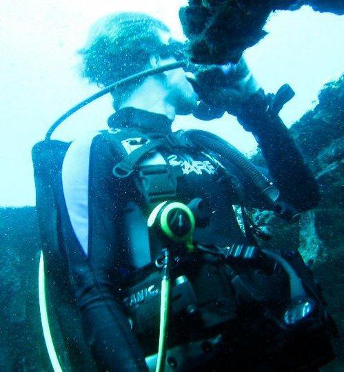 Diving Spigel Grove