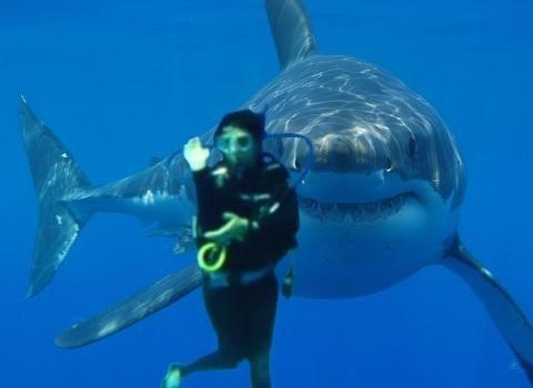 SharkGirl_FunWithPhotoShop