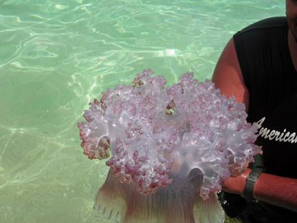A jelly Fish caought