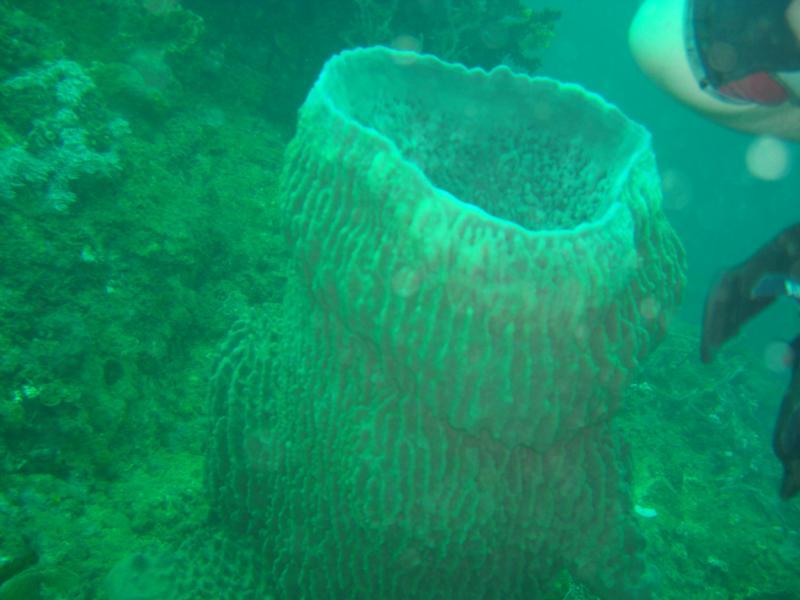 Divers Sanctuary