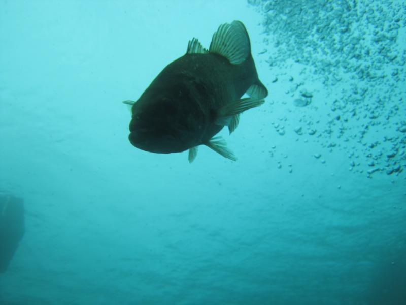Fish wanting food, Dutch Springs
