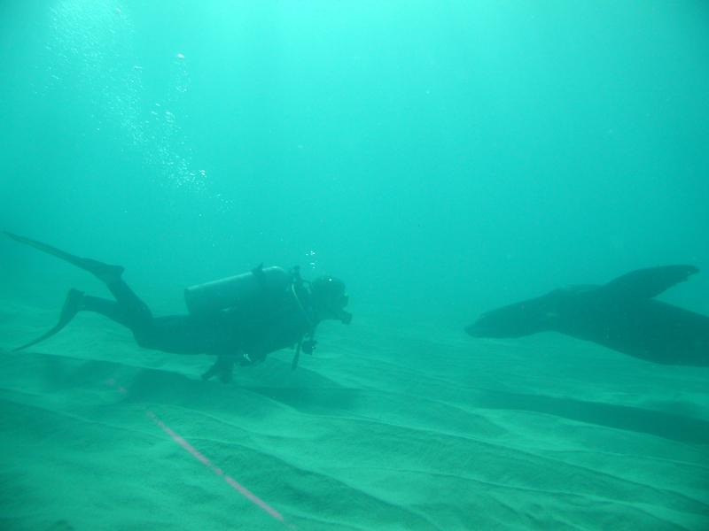 Encounter, Cabo San Lucas