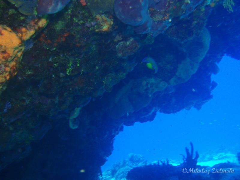 Unforgetable reef formations of Cozumel