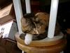 Cat on bar stool
