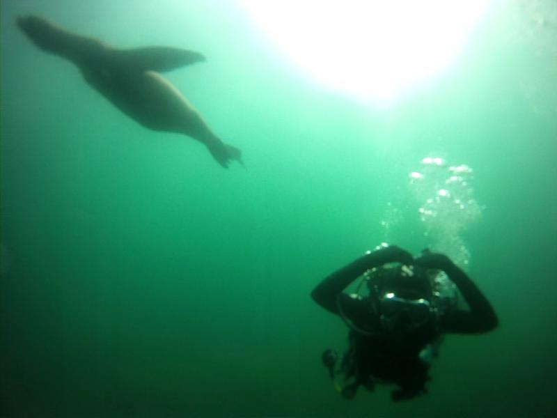 Underwater life~.