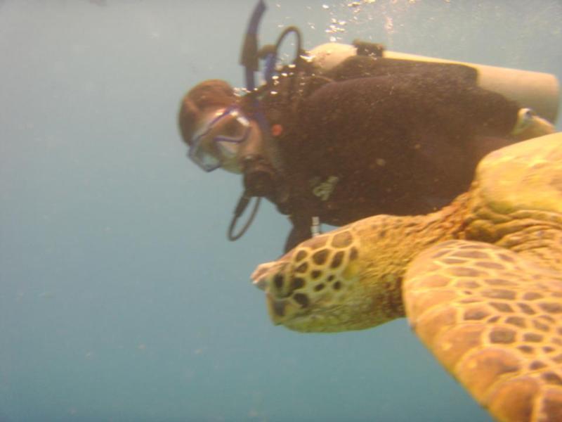 Sea Turtle, oahu, HI