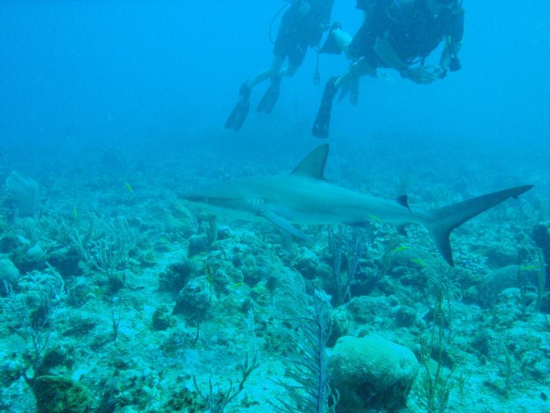Aquarium, Turks & Caicos