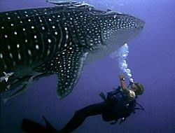 me & whale shark