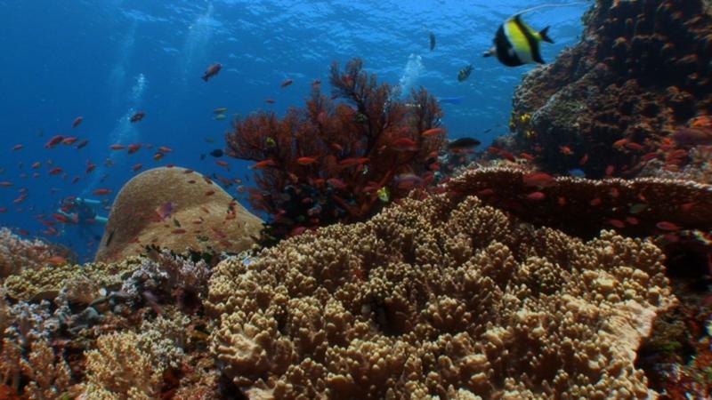 Reefs, Komodo