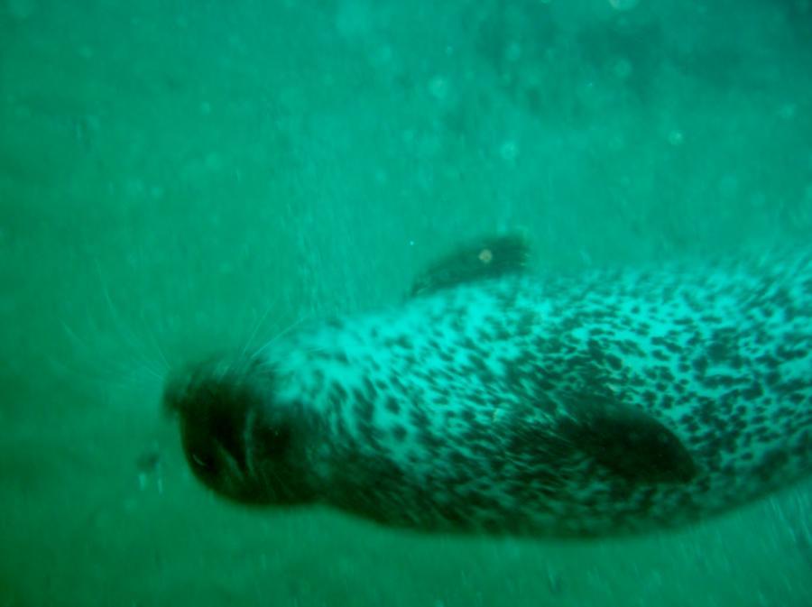 crescent bay dive