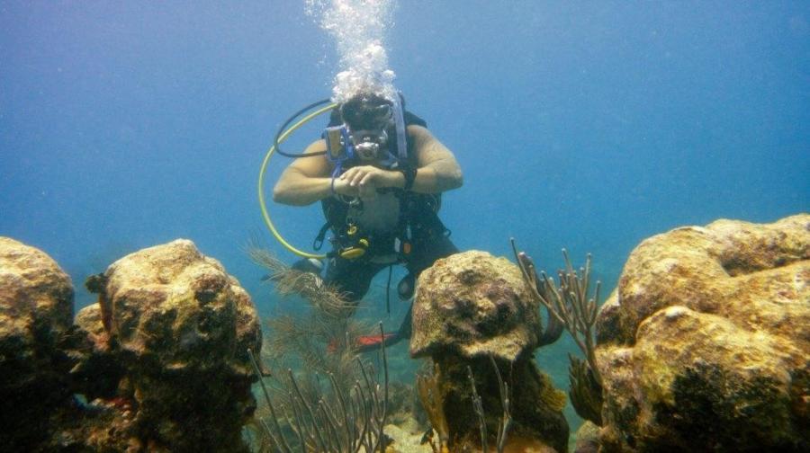 Reef Dive In Antiuga