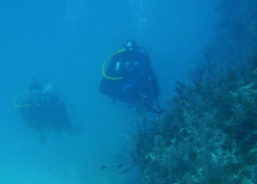 French Reef Key Largo, FL