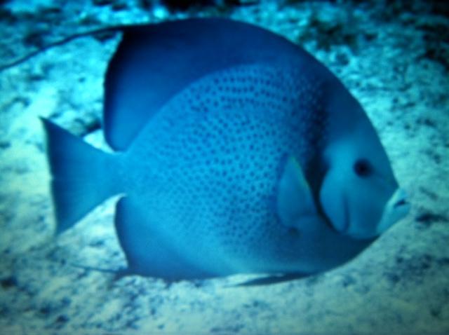 Fish - spc unk
