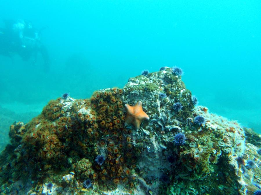 Colorful sea life of Channel Islands